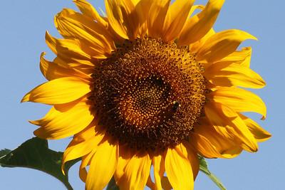 Deck Flower 7 6 2010 027