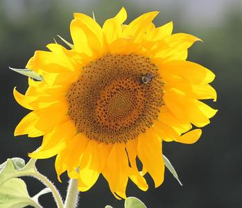 Deck Flower 7 6 2010 042