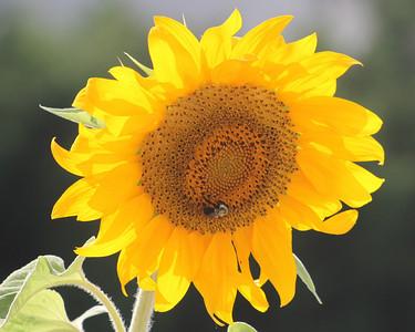 Deck Flower 7 6 2010 056