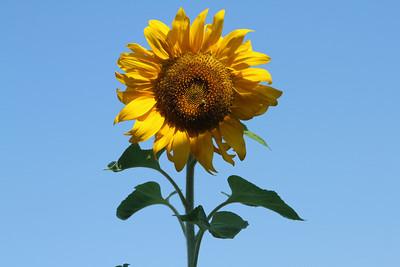 Deck Flower 7 6 2010 008