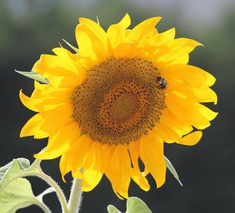 Deck Flower 7 6 2010 037