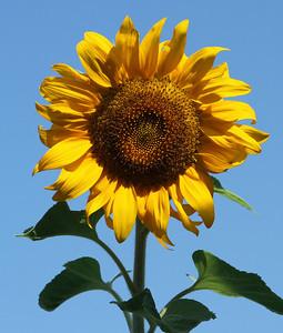 Deck Flower 7 6 2010 014