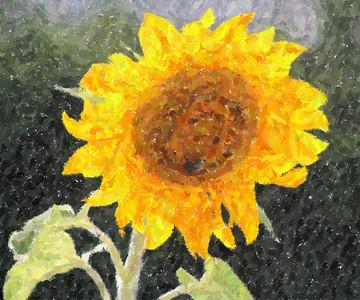 Deck Flower 7 6 2010 057
