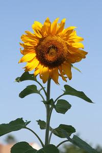Deck Flower 7 6 2010 009