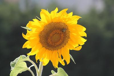 Deck Flower 7 6 2010 043