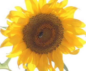 Deck Flower 7 6 2010 050