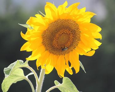 Deck Flower 7 6 2010 061