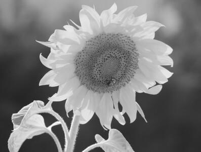 Deck Flower 7 6 2010 060