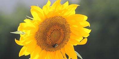Deck Flower 7 6 2010 055