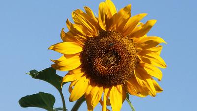 Deck Flower 7 6 2010 023