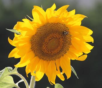 Deck Flower 7 6 2010 039