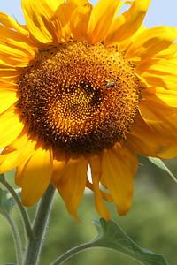 Deck Flower 7 6 2010 006