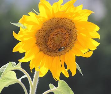 Deck Flower 7 6 2010 062