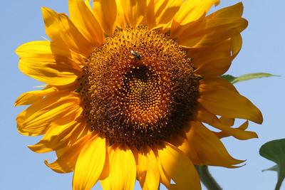 Deck Flower 7 6 2010 011