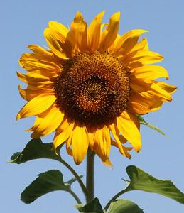Deck Flower 7 6 2010 029