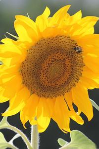 Deck Flower 7 6 2010 038