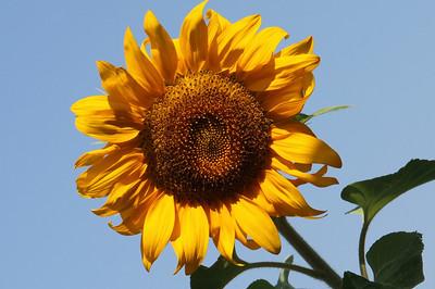 Deck Flower 7 6 2010 012