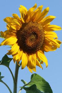 Deck Flower 7 6 2010 021