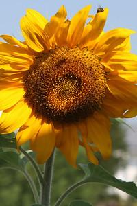 Deck Flower 7 6 2010 005