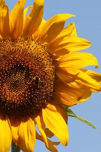 Deck Flower 7 6 2010 028