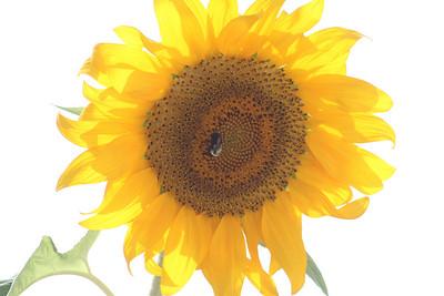 Deck Flower 7 6 2010 051