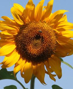 Deck Flower 7 6 2010 010