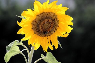 Deck Flower 7 6 2010 058
