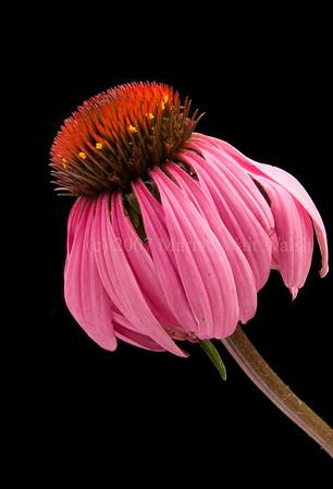 082808-Maine flowers-029-Edit