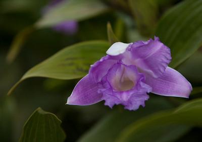 20100407-Monteverde-013
