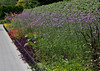 botanicalGardens-4184