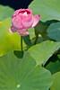 botanicalGardens-4252