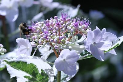 NY Botanical Garden 018