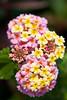 botanicalGardens-4258