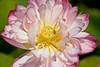 botanicalGardens-4283