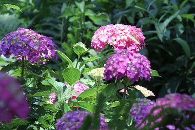 NY Botanical Garden 032