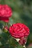 botanicalGardens-4301