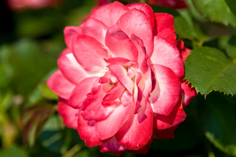 botanicalGardens-4304