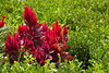 botanicalGardens-4257