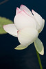 botanicalGardens-4237