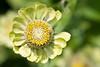 botanicalGardens-4221