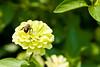 botanicalGardens-4218