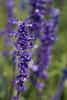 botanicalGardens-4308