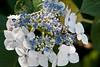 botanicalGardens-4172