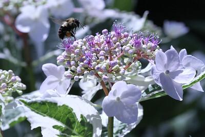 NY Botanical Garden 019