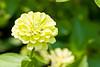 botanicalGardens-4219