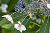botanicalGardens-4173