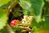 botanicalGardens-4289