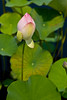 botanicalGardens-4243