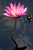 botanicalGardens-4254
