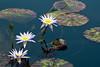botanicalGardens-4240